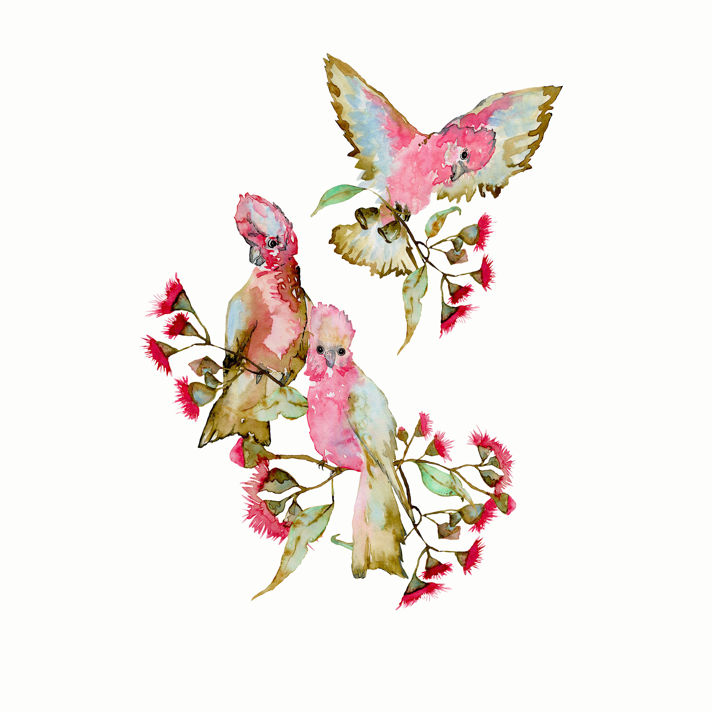 Galahs-and-Eucalypt-Blossoms-
